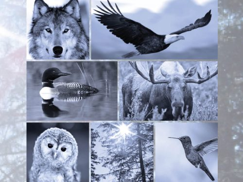 October 2020 :: Introduction to Animal Totems